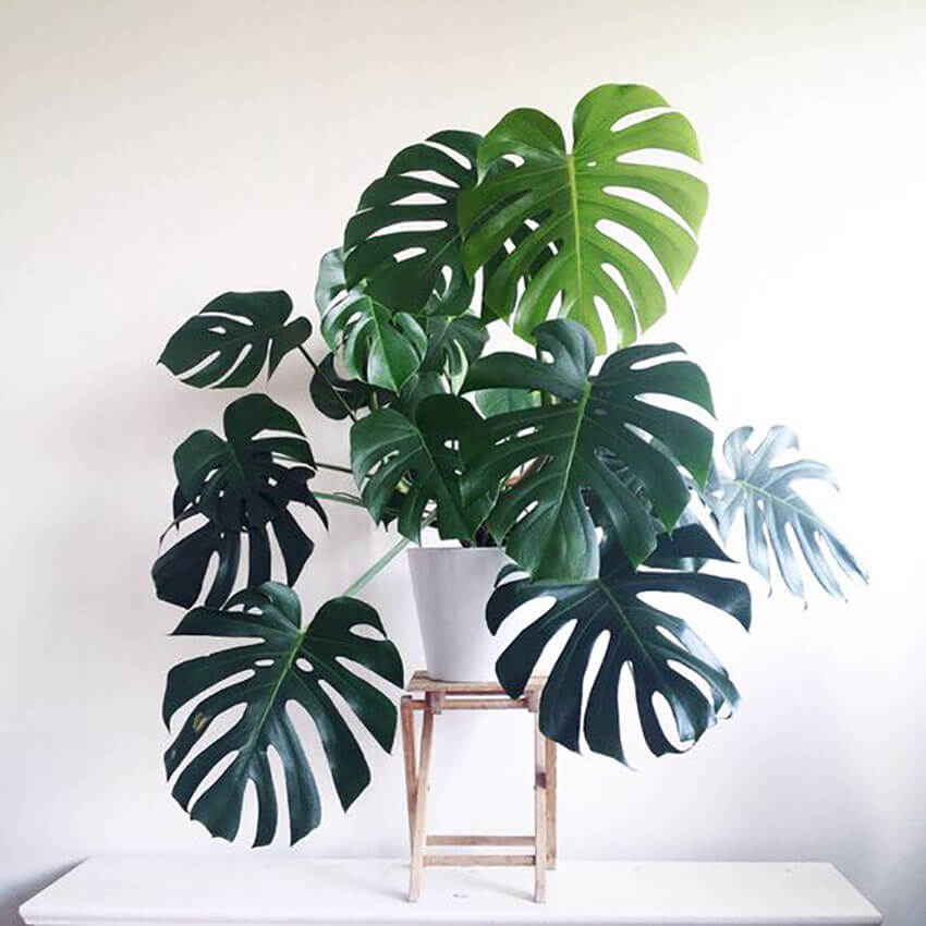 Plants can sit in any room in a house, just choose a corner where they can get enough sunlight!