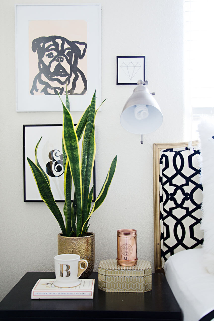 Snake plants have a very exotic look and are perfect to decorate a room.