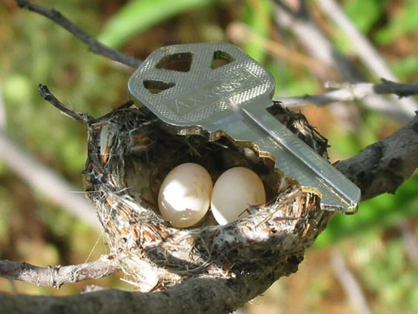 A hummingbird nest may be smaller than a key.