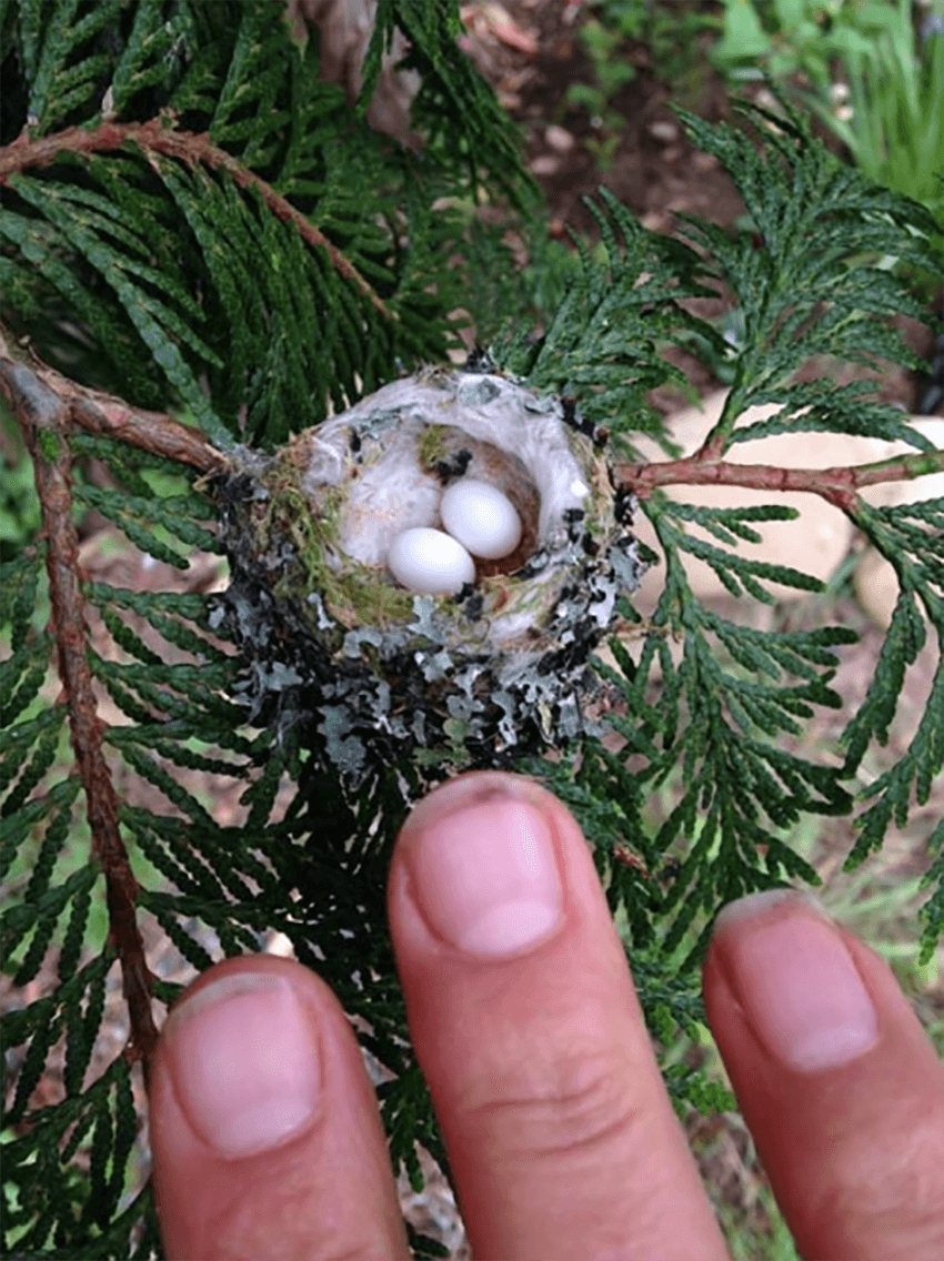 The nests are tiny, easy to miss.