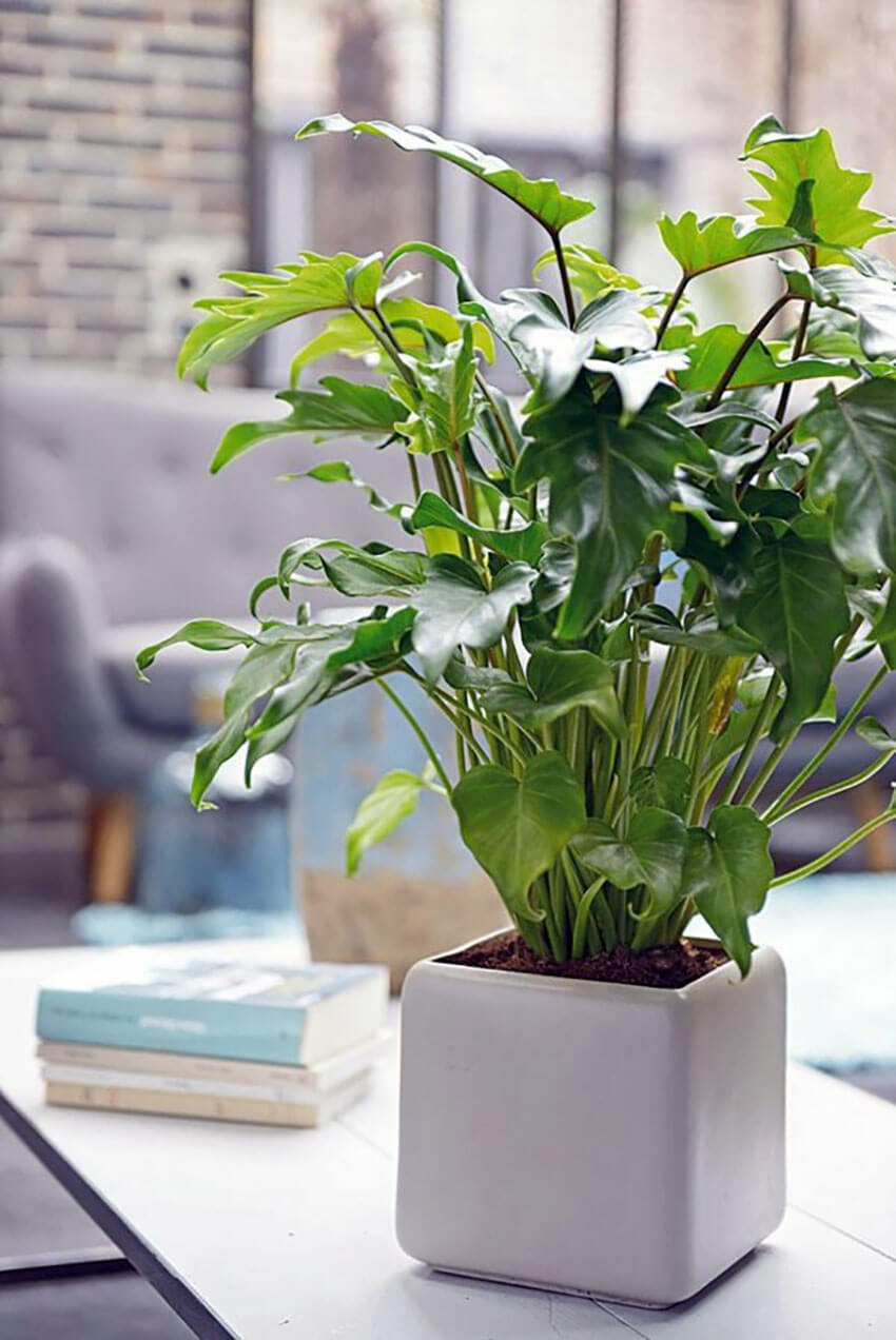 Ivy is a beautiful option to add to your home.