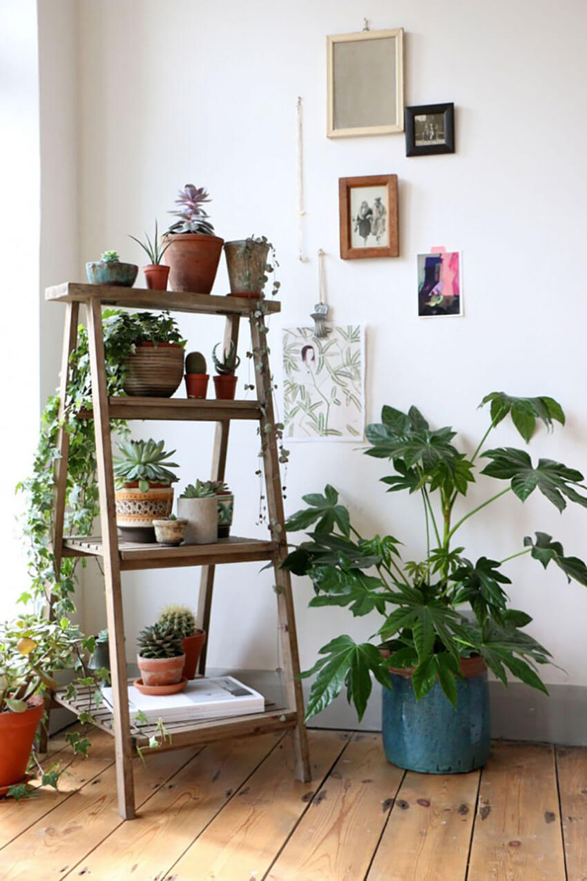 A collection of plants like this looks incredible in any house.