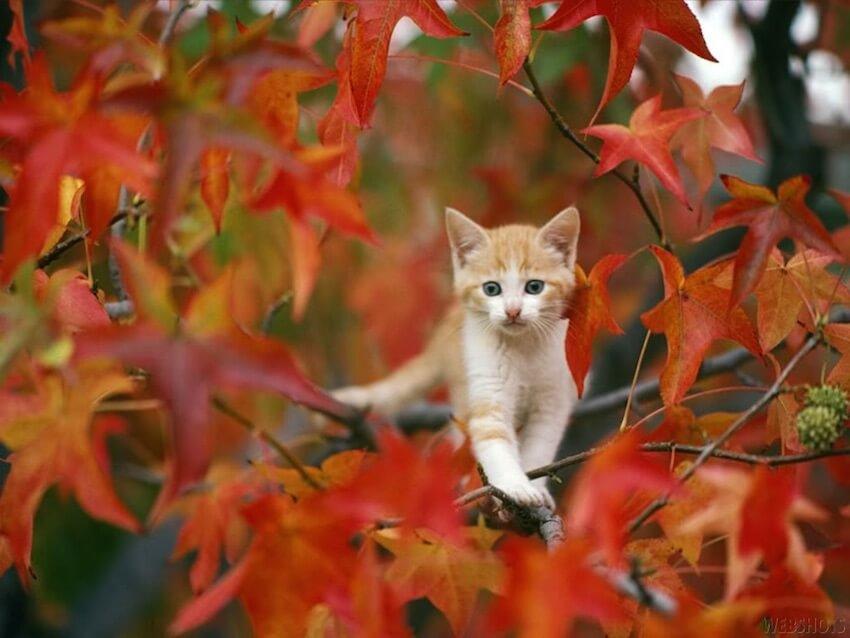Even cats love Fall foliage