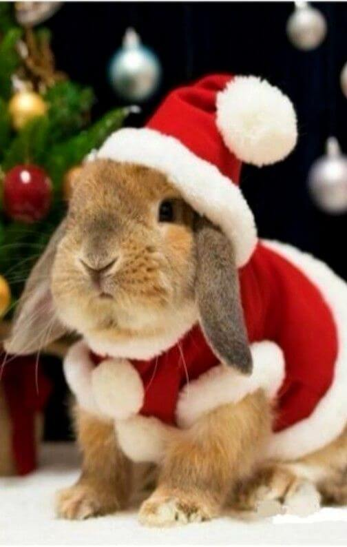 This adorable bunny dressed up as Santa is just too cute.