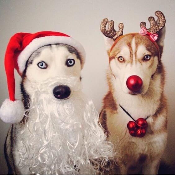 Most dogs will do anything for a treat, even dress up for the holidays!