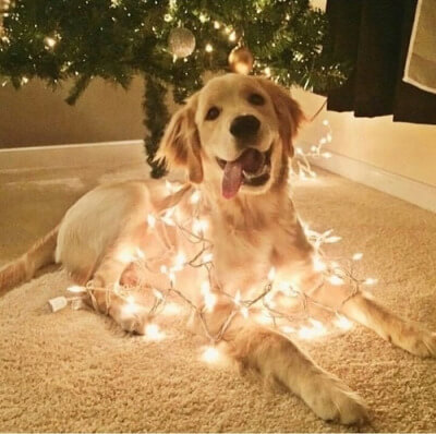 Dogs make such cute Christmas trees!