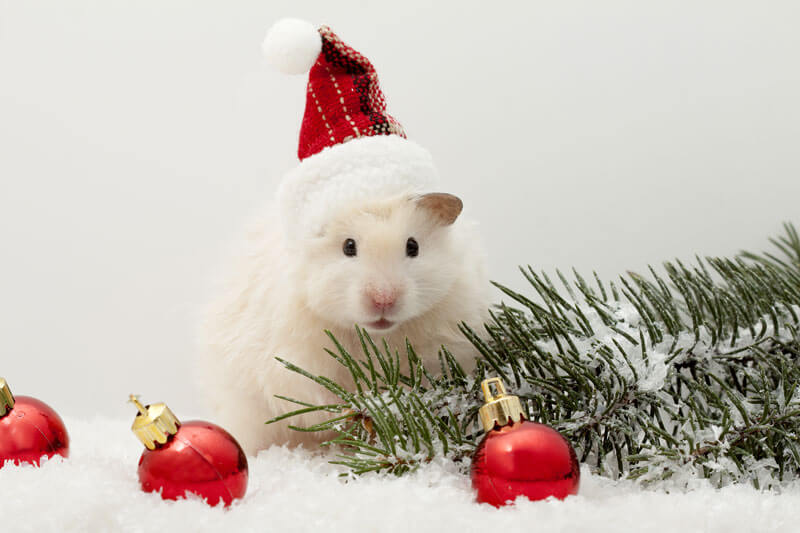 Hamsters on their own are adorable, but a hamster in a Santa hat? Too cute.