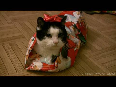 Learn how to wrap your cat up like an adorable gift!