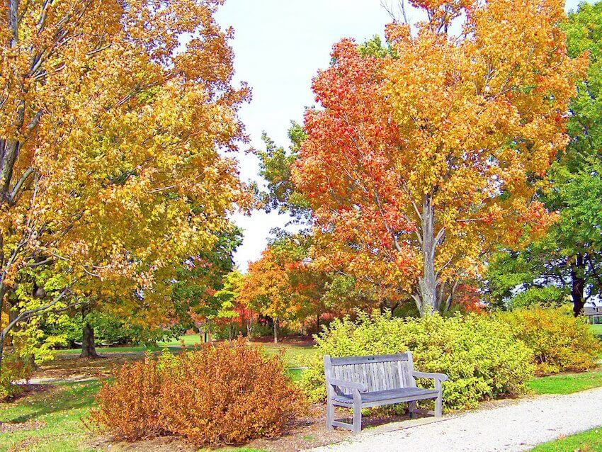 Autumn flavors for a home's backyard and hardscape