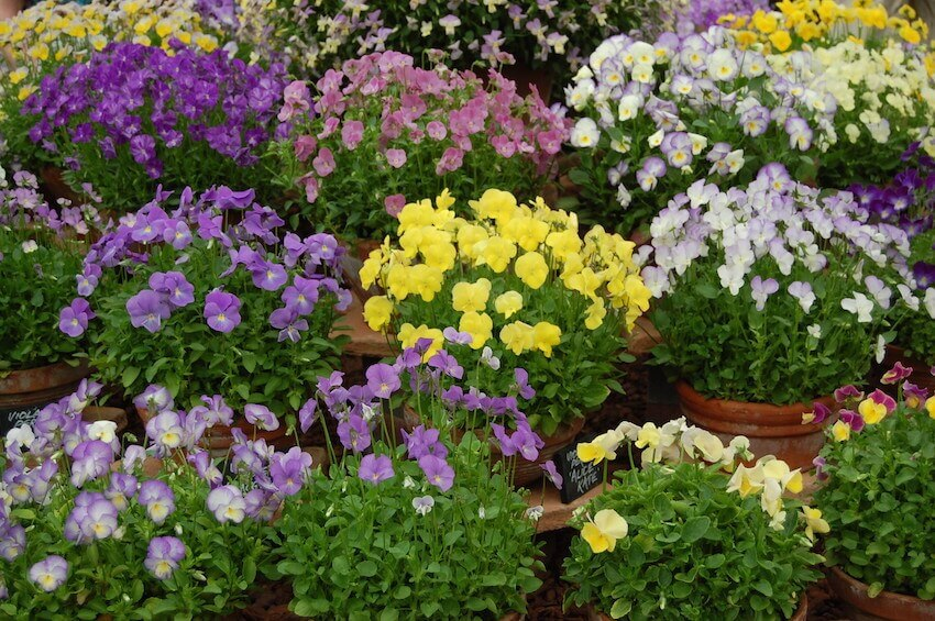 Flowery designs in your yard that look amazing