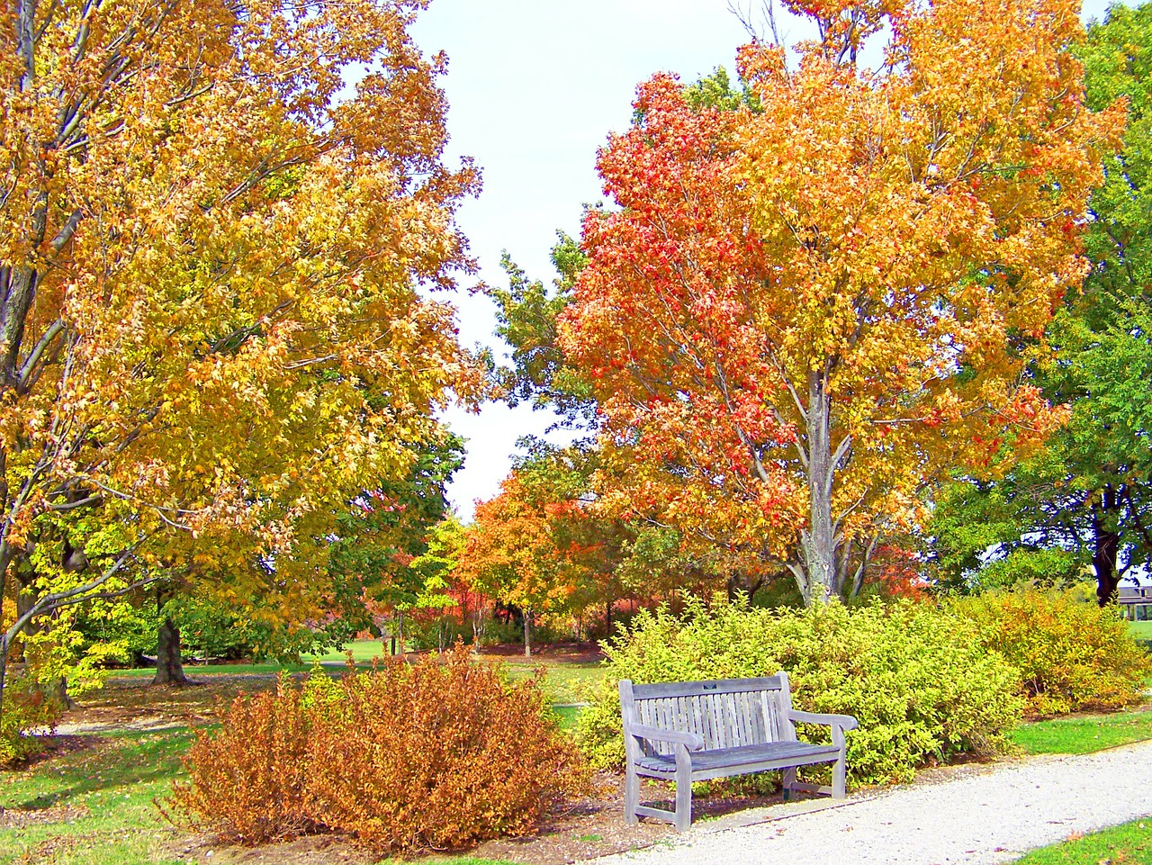 A Homeowner's Guide to Early Autumn Landscape Preparation