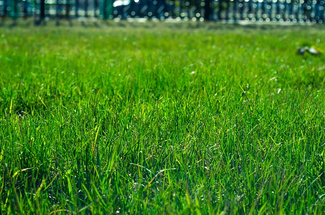 Lawn seeding is affordable, durable, and stronger.