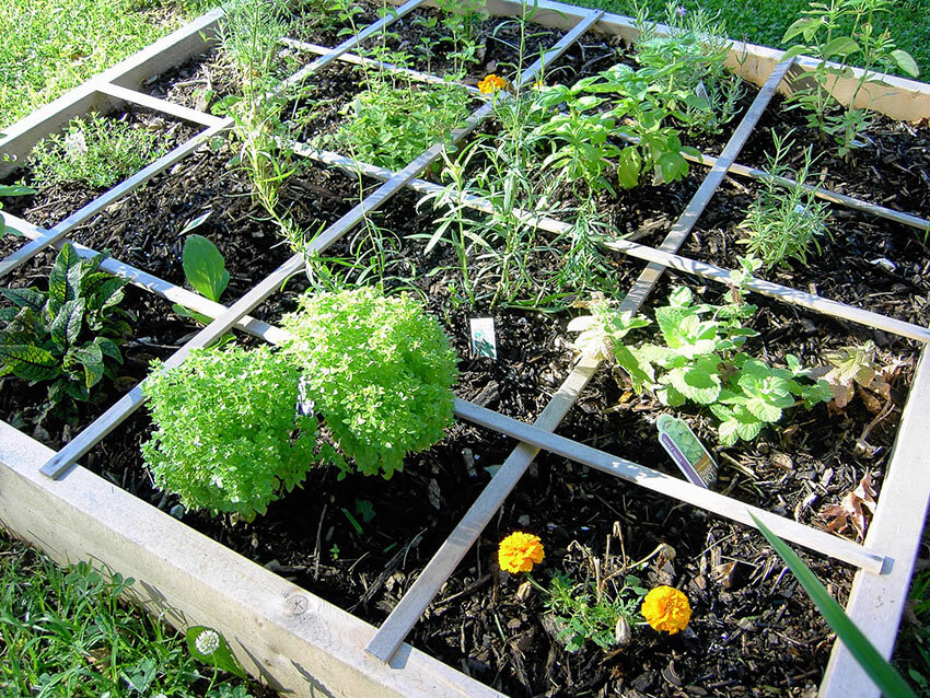 Raised beds are perfect for organic gardens