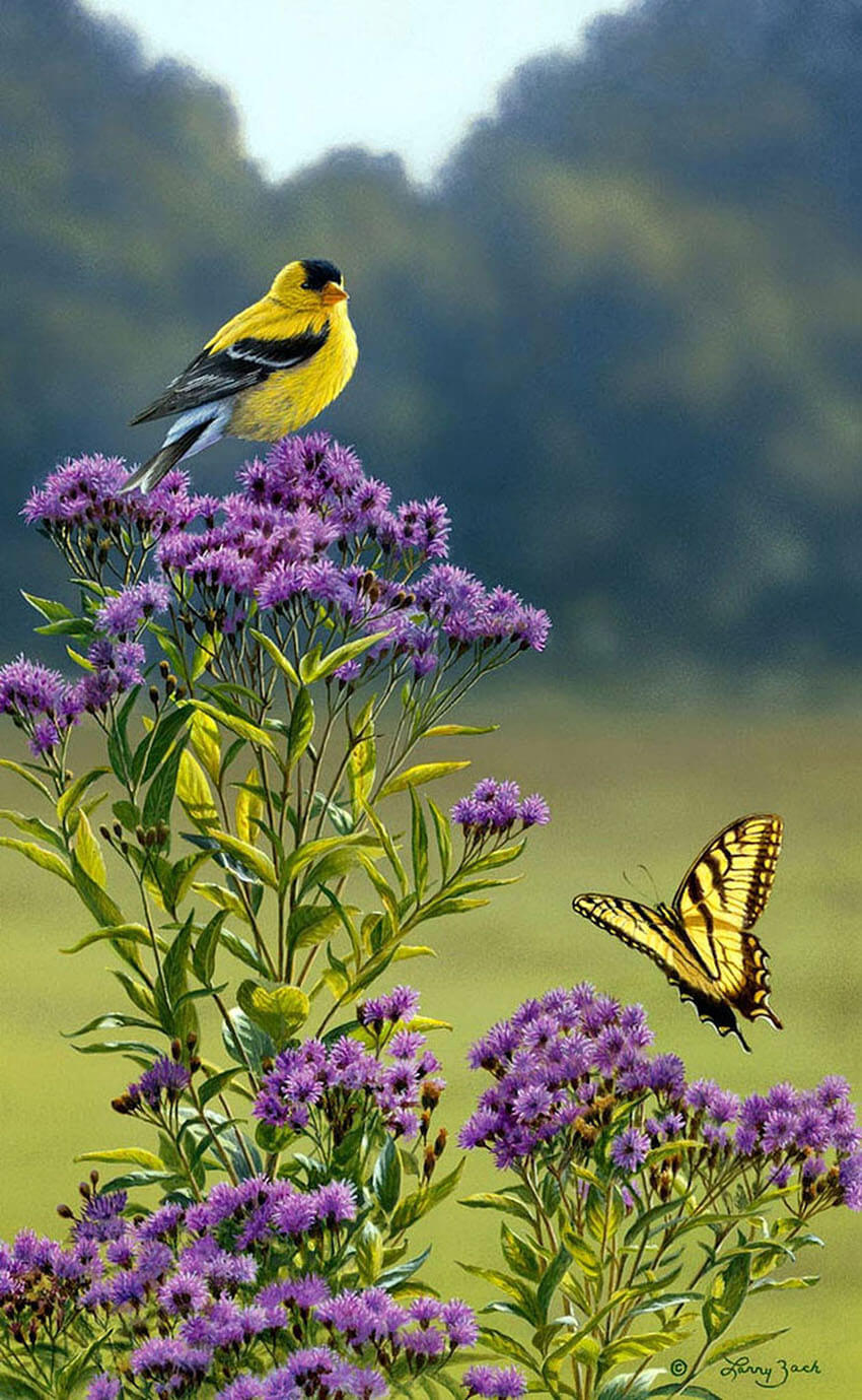 Birds, frogs and other certain animals are beneficial to your garden