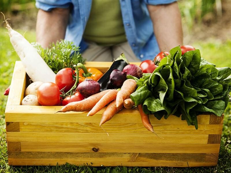 Start An Organic Garden In 8 Simple Steps