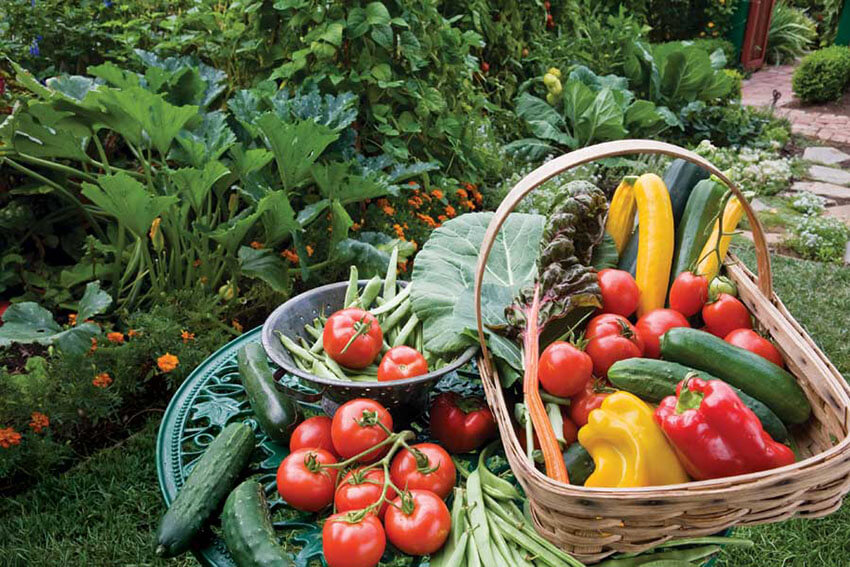 Have your own organic garden to produce chemical-free veggies