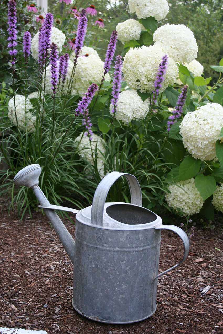 Mornings are the perfect time to water your plants