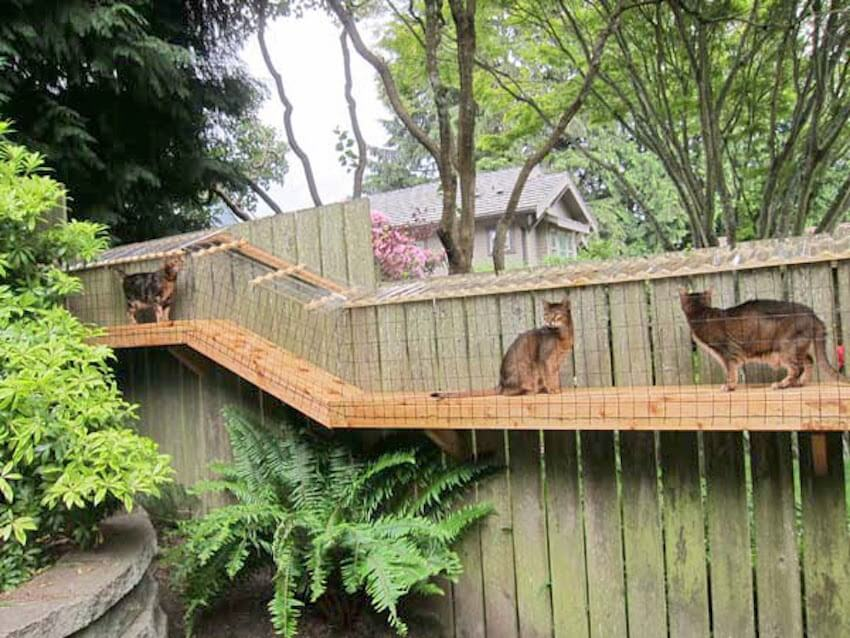 Exterior fence options to make your cat happy