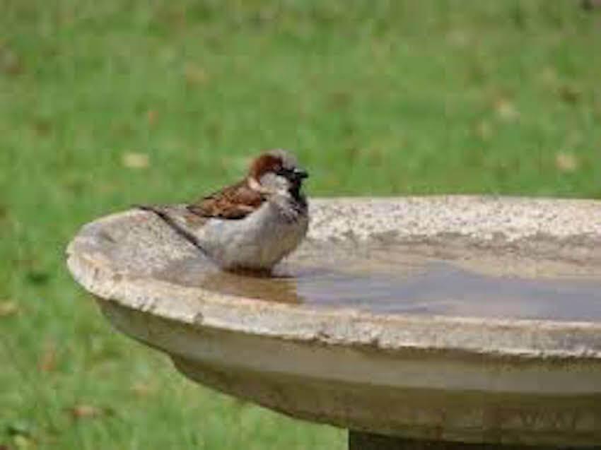 Bird baths in a yard are always a welcome addition