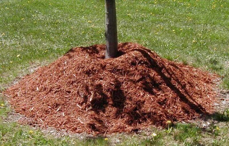Mulching helps any yard look like new