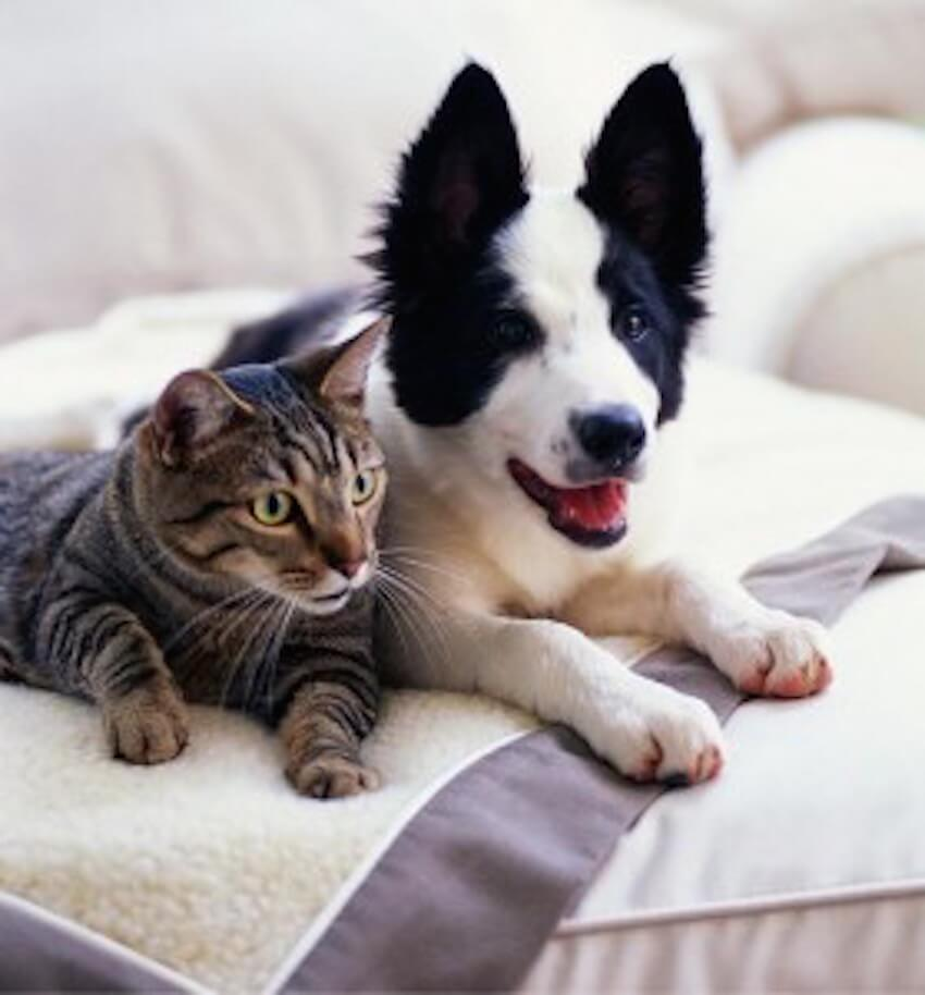 Furry friends can usually be kept outside to improve interior air