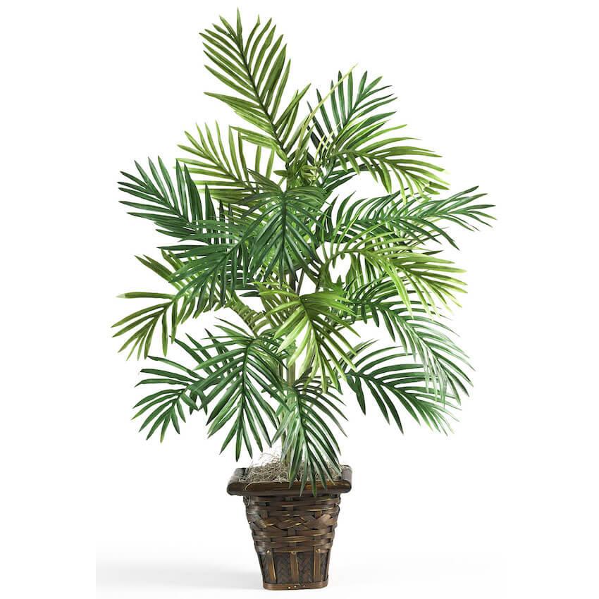 Natural air preserve plant