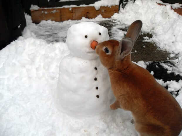 This bunny nibbling on the snowman's nose is so cute!