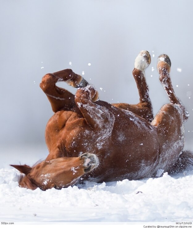 This horse loves to roll around in the snow!