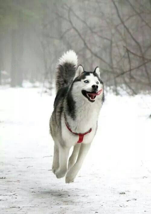 This dog just looks so happy to see snow.