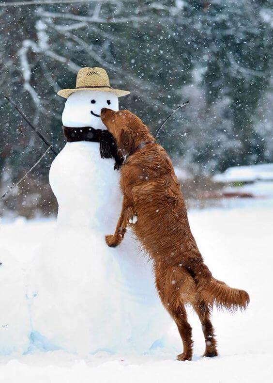 Dogs are a snowman's best friend.