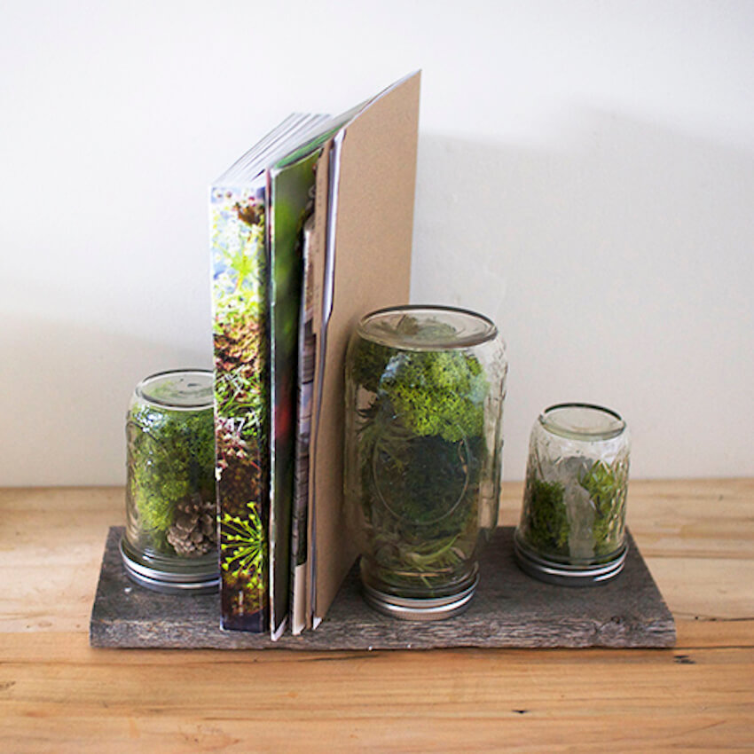Indoor plants to help with office decor and organizing