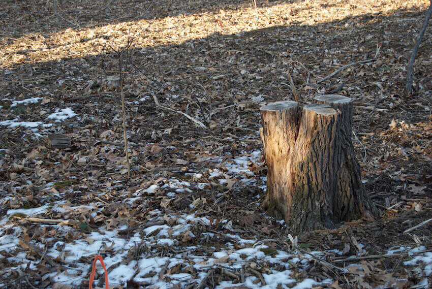 Stump grinding: lawn care that benefits you home in more ways than one