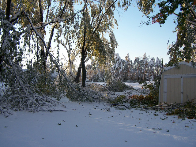 Regular snow removal can help keep your trees and yard healthy.