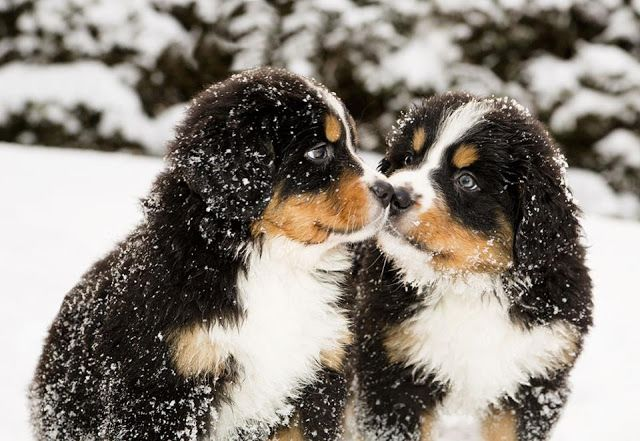 Keep Your Pets Safe and Healthy this Winter