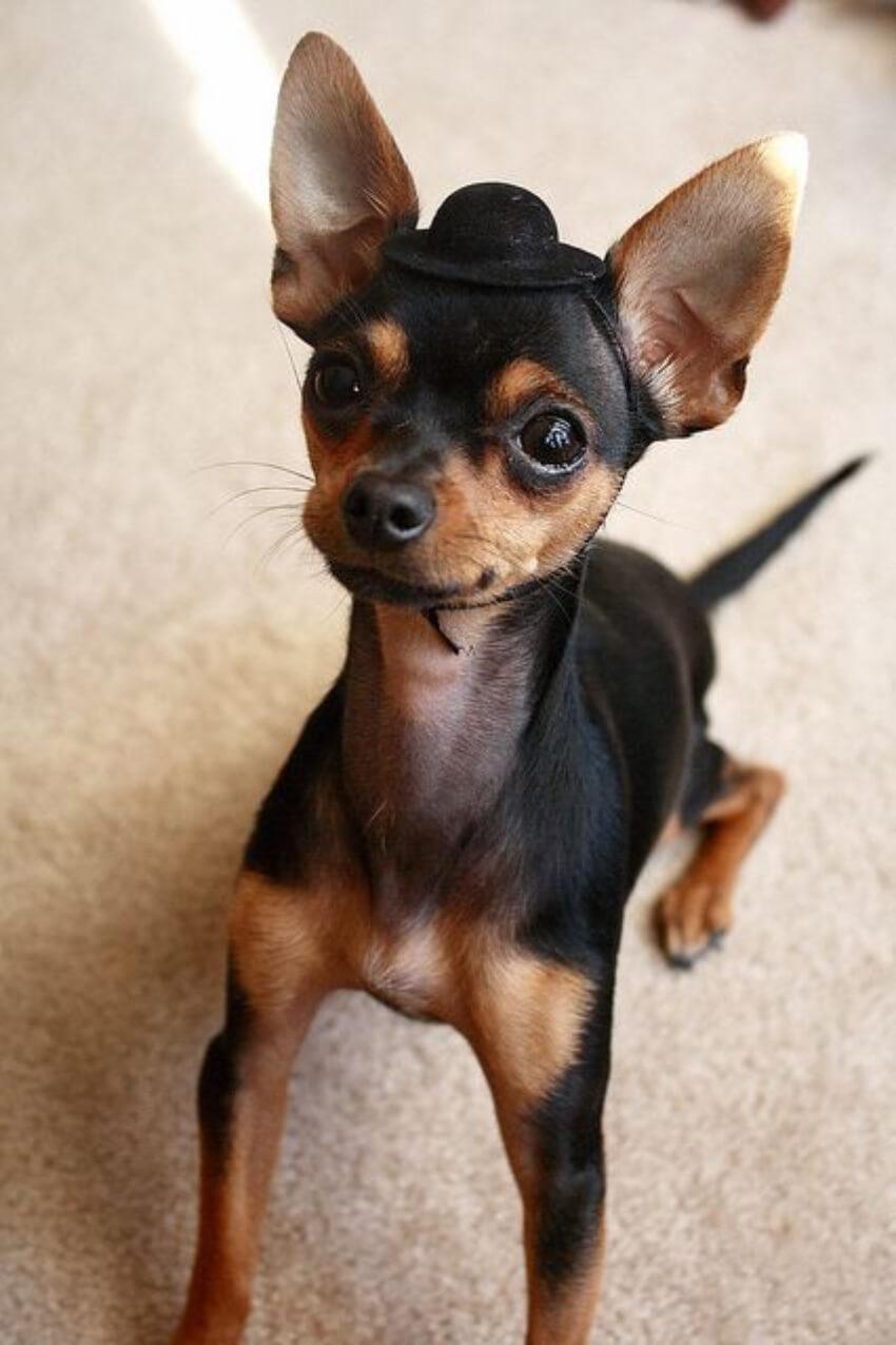 The fanciest pup alive!