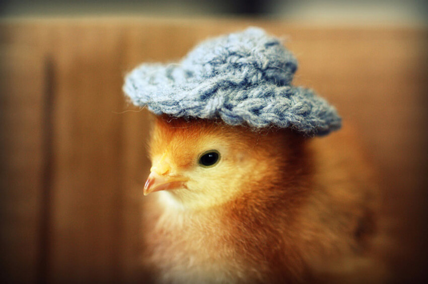 Everyone needs a winter hat!