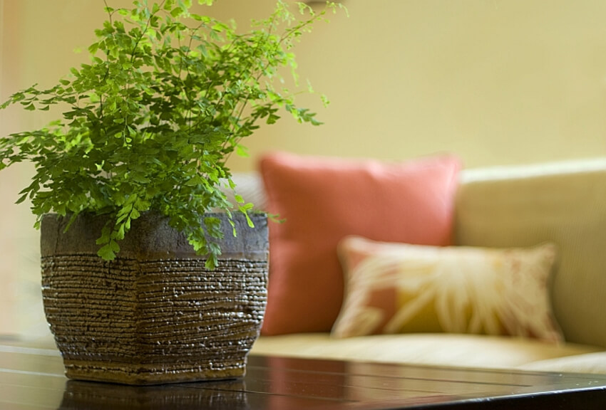 Air quality is among the several benefits that indoor plants bring.