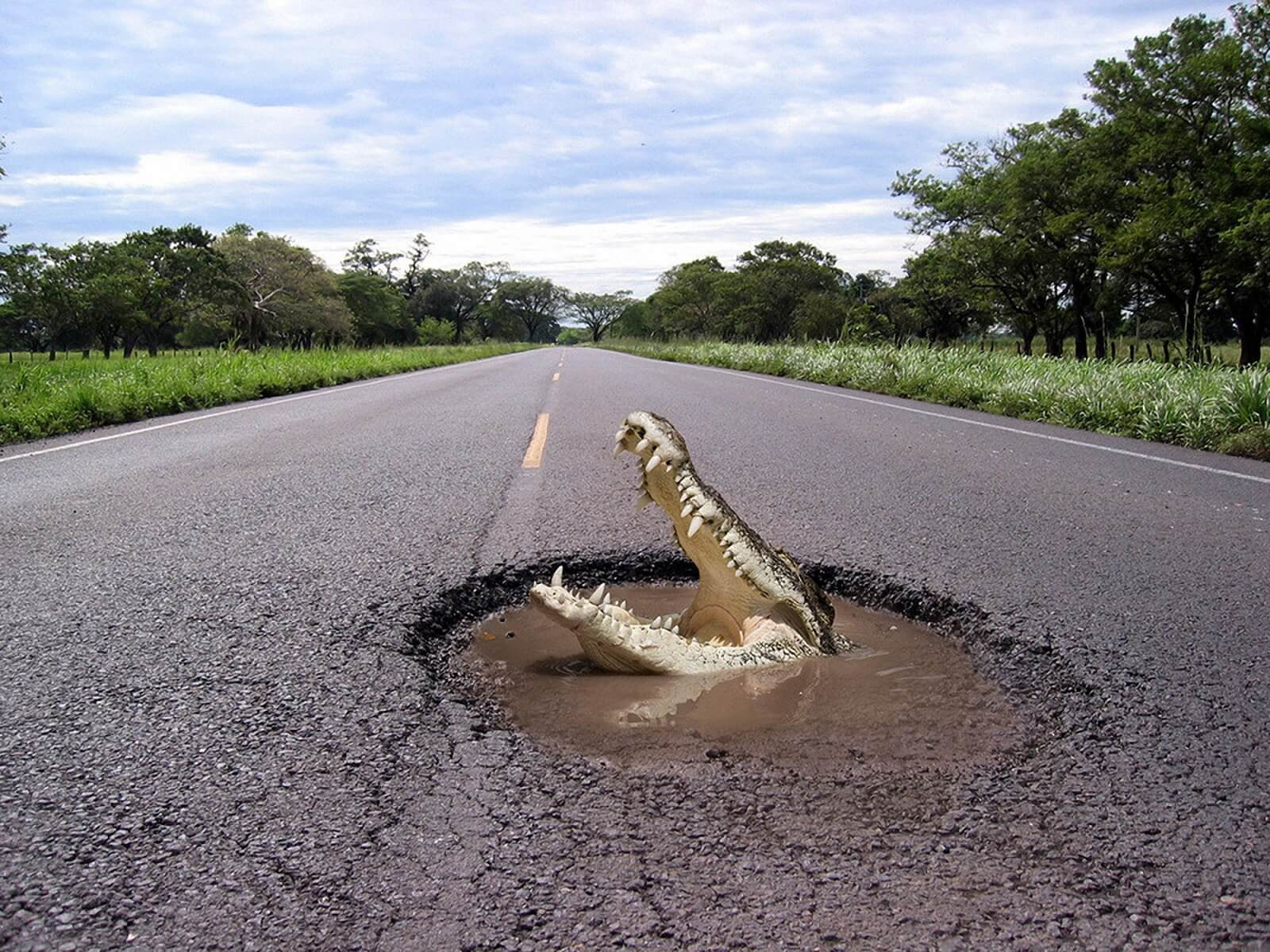 Not quite as bad as a gator in the road but...
