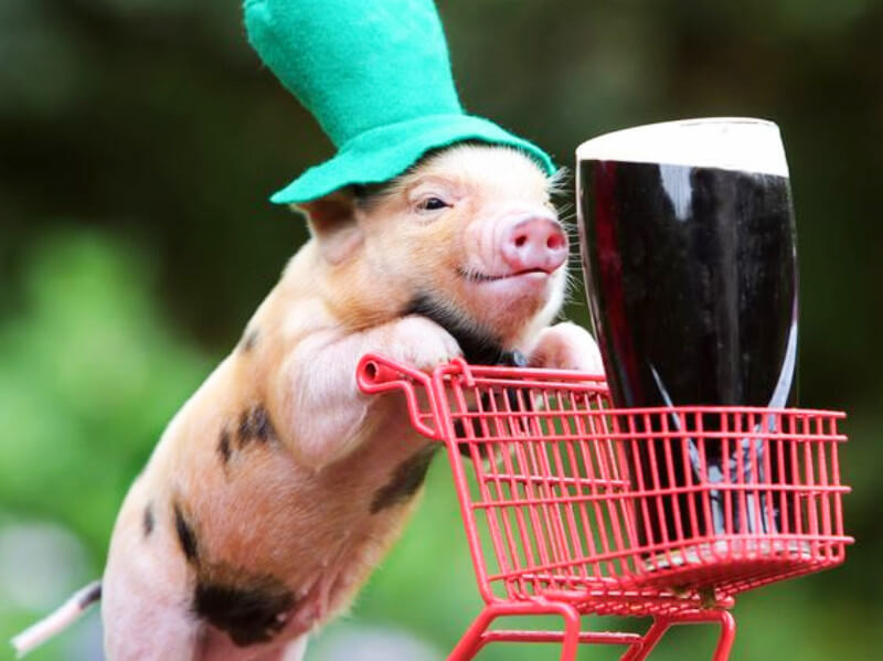 9 Animals That Are Just Too Ready for St. Patrick's Day