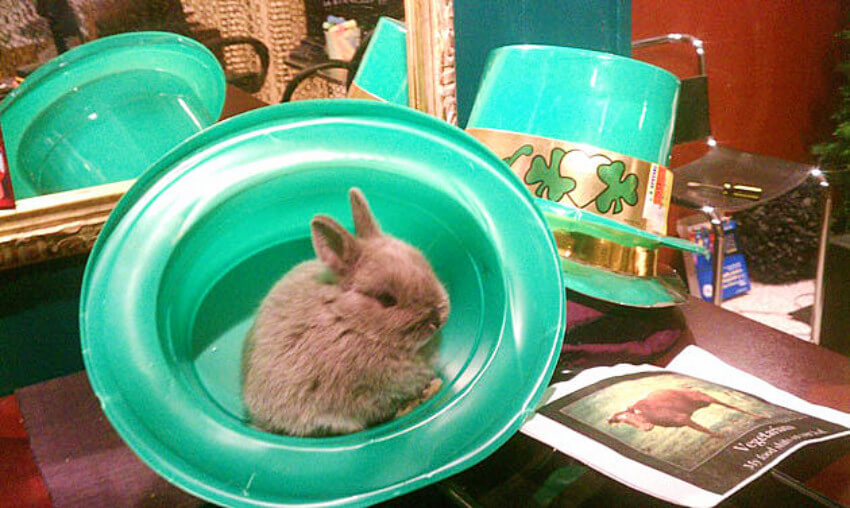Bunny wanted a magic trick straight out of a St. Patrick's Day hat!