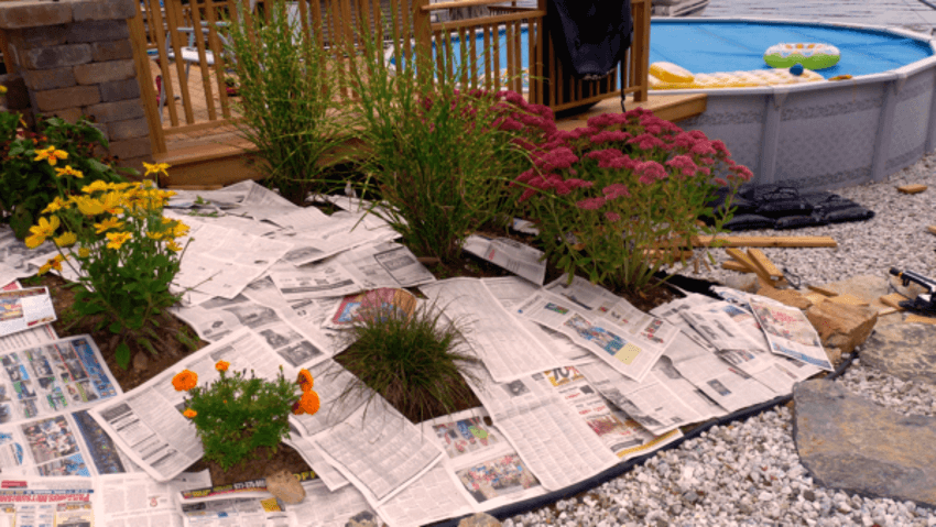Newspapers can be pretty good for killing weeds as well.