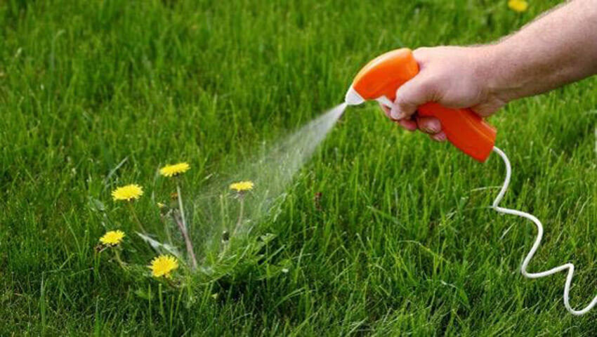 Drench the weeds with salt, vinegar and dish soap mixture.