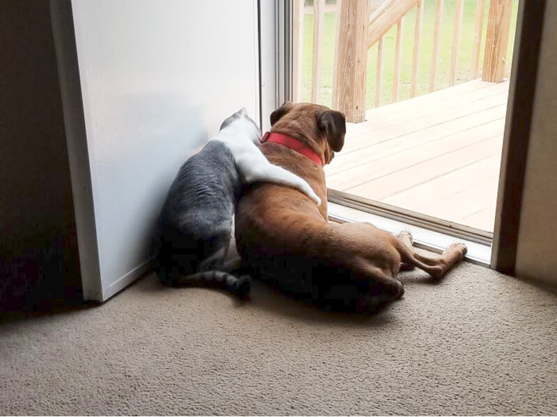 The Cutest Photos of Friendship Between Cats and Dogs