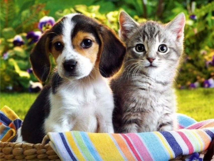 Baby cats and dogs get along easier.