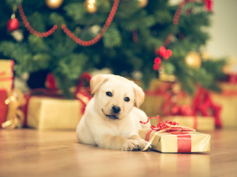 How to Make Your Christmas Tree Safer for Pets and Toddlers