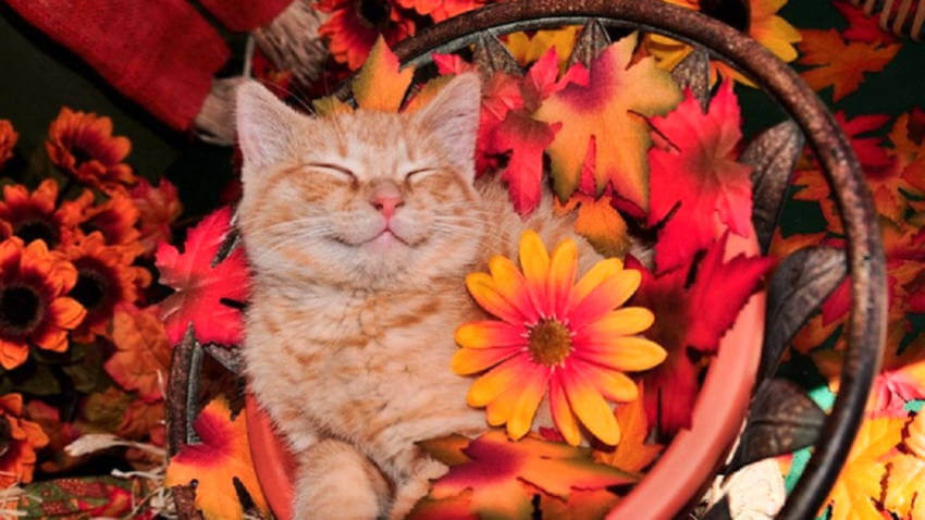 It's rare to see cats smiling, but they're so cute when they do!