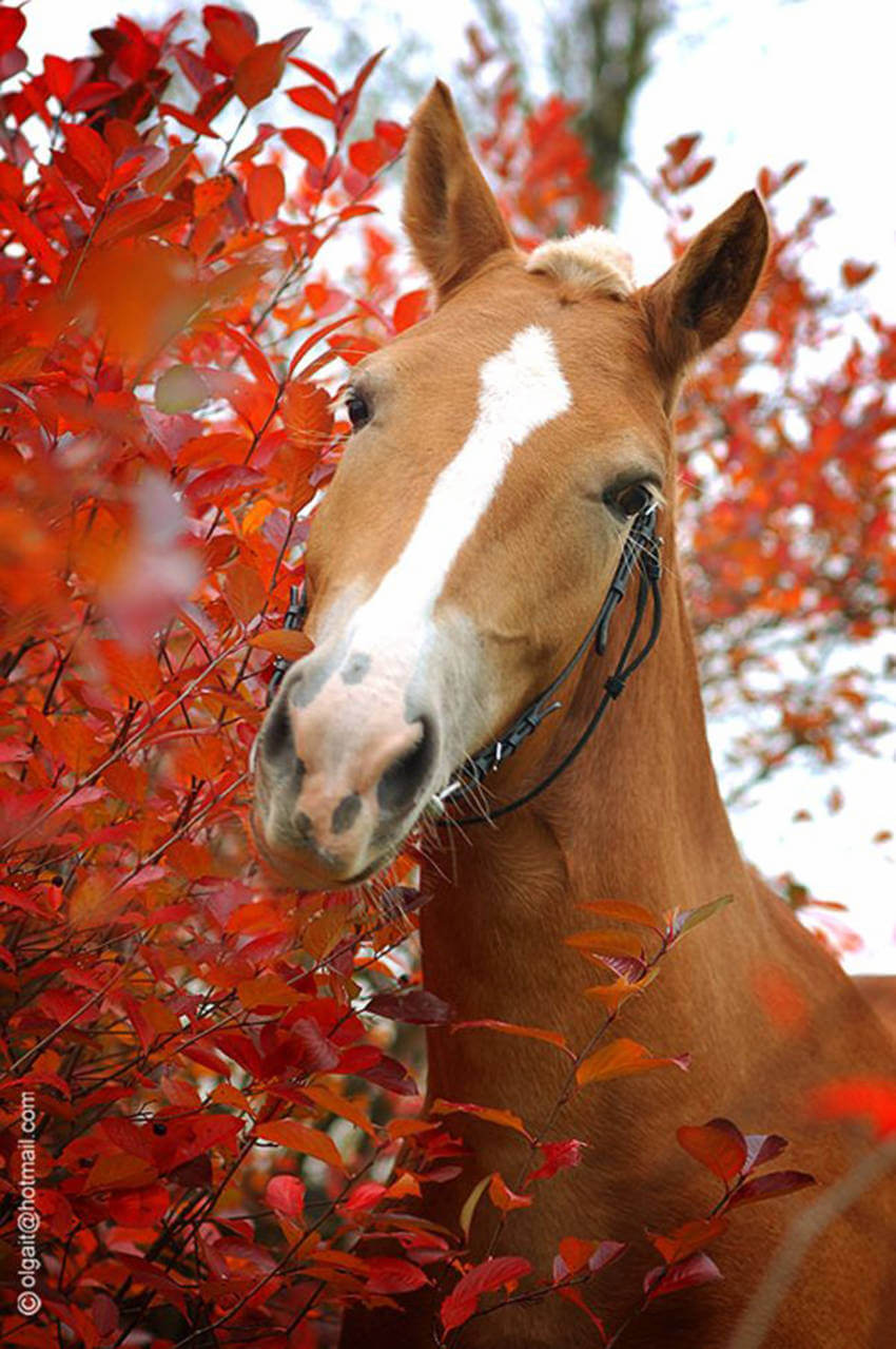 Horses are beautiful animals that enjoy the season as well!