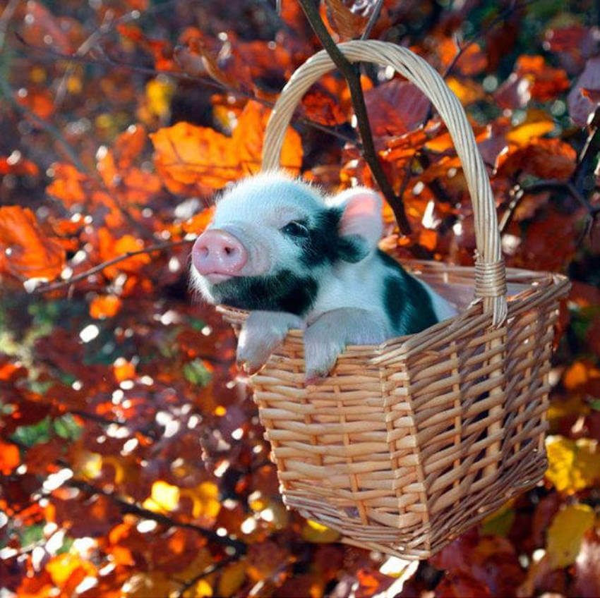 A basket is a great place for a nap during fall months!