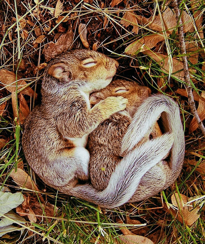 Shhh, don't wake the squirrels!