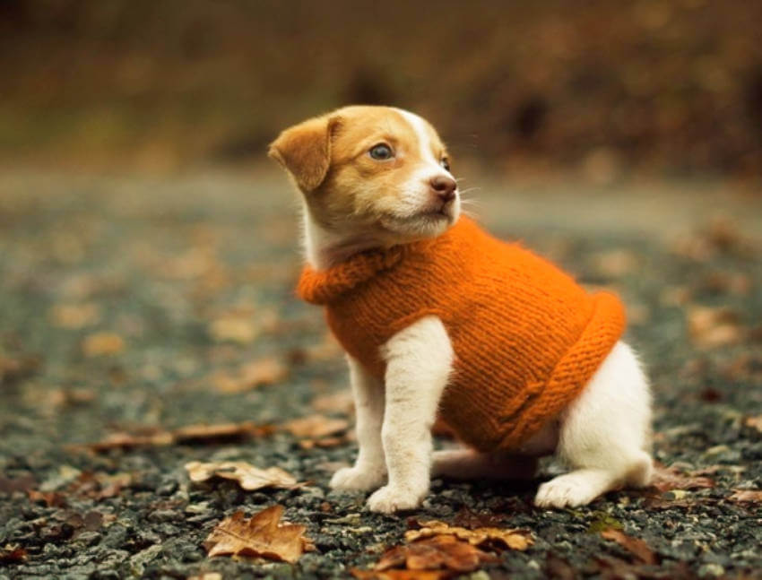 Dogs are so great wearing sweaters!